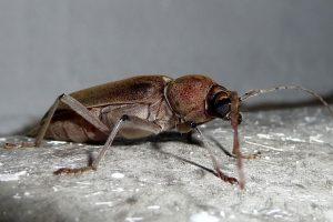 hynera environnement pour la lutte contre les insectes de bois bruz. Black Bedroom Furniture Sets. Home Design Ideas
